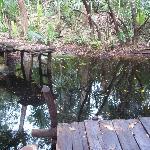 The refreshing cenote