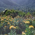 Protea Gardens