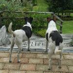 Mo and Max keeping guard!