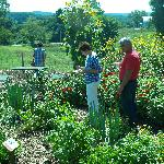 Guests exploring our extensive organically managed gardens