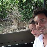 Getting close to lions