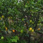 Many fruits around