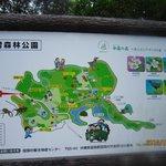 Kunigami Village Forest Park Photo