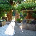 Chameleon Courtyard