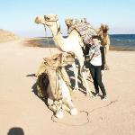 Кстати, на Синае все верблюды одногорбые