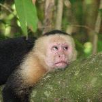 Monkey annoyed by tourists