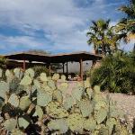 cactus garden -1