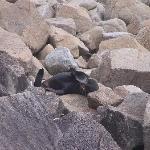 Seal in the sun
