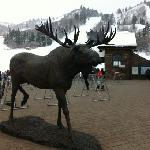 Greeted by the Moose at Snow Basin