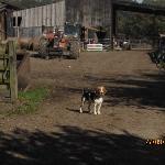 The dog on the farm