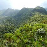 Mount Pelée view