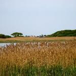 Marshlands at Yarmouth