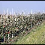 Grey Couny hosts dozens and dozens of apple orchards