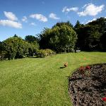 The frontyard (and a chicken)