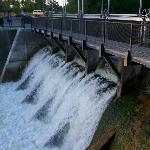 The dam dam