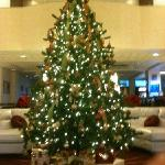 Beautiful Christmas tree in lobby