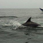 Delfines Punta de Choros