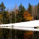 Stowe Meadows Pond - Reflections