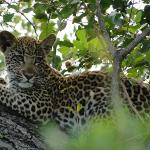 Leopardo de unos 6 meses