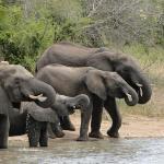 Elefantes frente al lodge