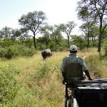 Rinoceronte a la vista