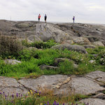 Wild flowers amongst the rocks