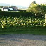 View from the room of the vineyard