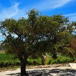 Casas del Bosque Vineyard. Beautiful and made with love.