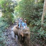 Elephant riding in Chiang Mai!