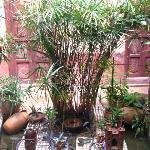 la fontaine et ses petits animaux