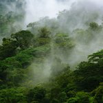 Photo of Children's Eternal Rain Forest