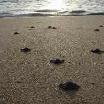 Turtle release in Todos Santos