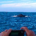 Whales off Punta Mita
