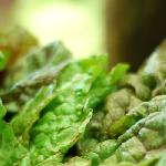 Seasonal, Organic Fruits & Vegetables