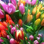 Vibrant, Stunning Bouquets from natural Pacific Coast growers