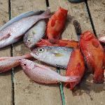 täglich frischer Fischfang am Steg neben dem Hotel