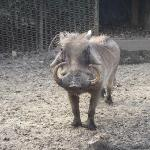 A hog