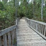 Elevated walkway over swampy area