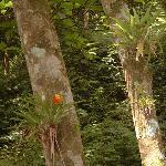bromeliads in Parque