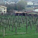 le vigne dallo hotel