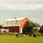 Pasture and Barn