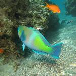 What a pretty fish