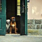 Villa Fausta B&B Foto