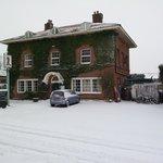 snowy saracen