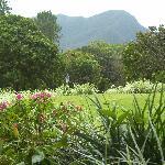 The beautiful lush grounds