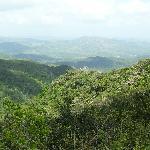 The lovely lush green mountainside