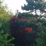 Matin dans les arbres du jardin