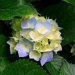 joile bouquet  belle soiree