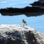 Een levendige fauna in Patagonië op het strand van de logde