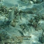 Sotto all'acqua
